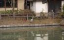 蛇池に飛来した鷺